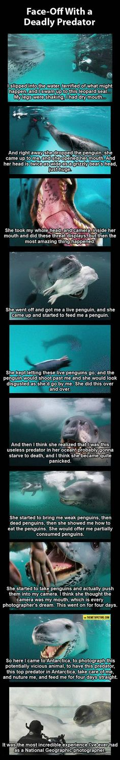 Cute story from National Geographic photographer... the poor seal was afraid his new friend was too stupid to live! Love this.