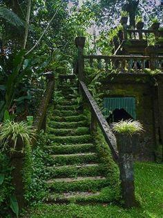 secret gardens, stairway, dream, green, australia