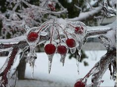 berri, cherri, red, tree, friend photos, winter wonderland, frost, tap, travel photography