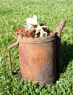 Rusty Garden. Old Oil can and Succulents.     by Matt Jackson 2012
