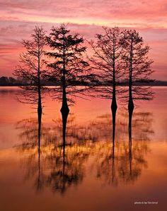 Cypress trees at dawn, Lake Chicot S.P., Arkansas - Tim Ernst Photography