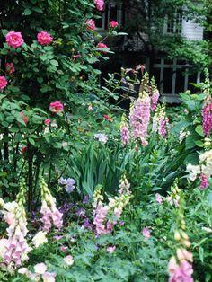 Create Beautiful Plant Combinations