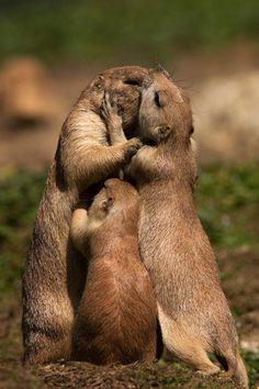a kiss, prairi dog, dogs, hug, family photos, creatur, beauti, families, animal