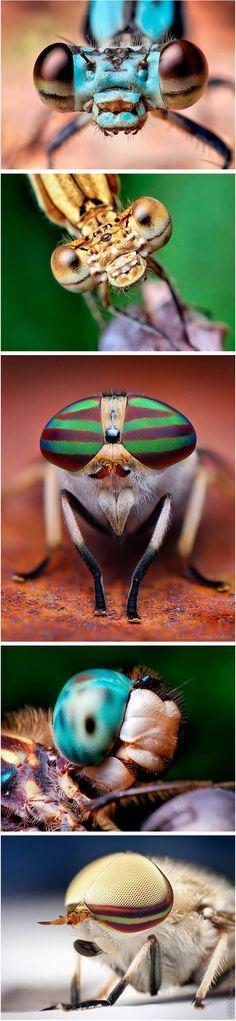 Macro shots of insects eyes by Thomas Shahan, a photographer based in Oklahoma, USA.
