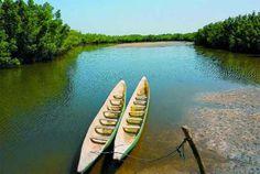 Dugout canoes on Mandina Bolog at Makasutu