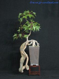 Nature Art Bonsai Tree