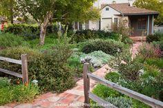 Picket fence and brick path entering front yard California native plant drought tolerant garden, Santa Barbara, spring design by carol bornstein
