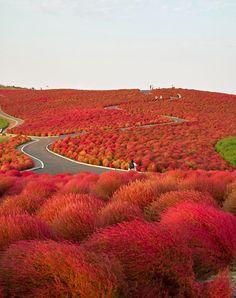 red, real life, panda, seasid park, color, hitachi seasid, place, flower, bucket lists