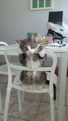 Kitty On Chair #Cute #Funny