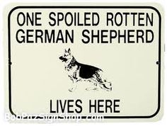 funny german shepherd pics - Google Search