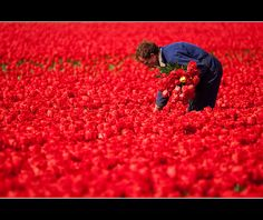 at work in a sea of scarlet