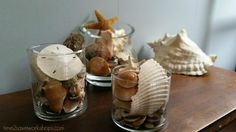 shells-in-jars