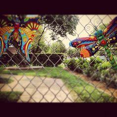 Fly fly fly! fli fli, photo