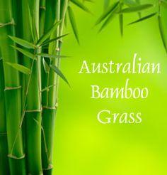 Australian Bamboo Grass Fragrance Oil  #fragranceoil #fragranceoils #fragrance