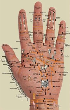 Life Style: Reflexology Chart for Hand Points