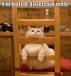 silly cats, chin up, funny humor, funny pictures, funny cats