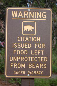 Bear Food