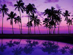Purple Topical Sunset
