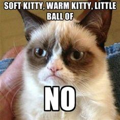 funni stuff, anim, laugh, grumpi cat, giggl, humor, meme, grumpy cats, thing