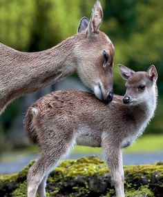 baby deer, baby george, mothers, nature, random quotes, creatur, baby animals, animal babies, animal photos