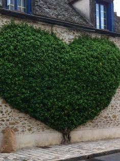 garden walls, street art, topiari