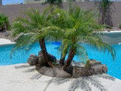 small palm trees for