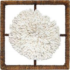 Shadow Box Plato Coral