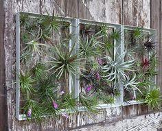 Vertical Gardening Inspiration