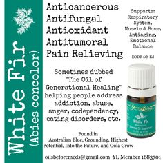 White Fir is one of Young Living's promo essential oils for August 2014. This definitely sounds like an oil everyone can use and if you spend 190PV, it's yours for free!! oilsbeforemeds@gmail.com YL Member-1683701 #YLEO #youngliving #essentialoils #YLPromo #oilsbeforemeds
