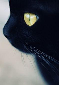 kitty cats, anim, kitten, cat eyes, chat noir, pet, black cats, green eyes, beauty