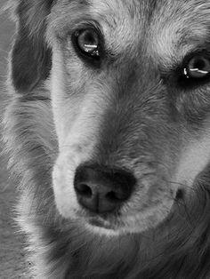 dog pics, ador cat, dog lovers, babi dog, puppy dog eyes, beauti, baby dogs, dog pictures, friend memori