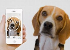 PiP | The Pet Recognition App | Re-uniting lost pets with their owners.