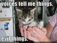 humorous pictures, cat, animal humor, funni, evil thing, evil kitti, photo galleries, funny kitties, the voice