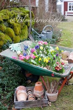 I love a wheelbarrow planter