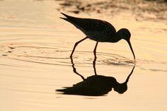 10 Top National Wildlife Refuges To Explore - Includes the St. Mark's National Wildlife Refuge near Tallahassee, Florida
