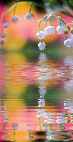 bell, white flowers, water reflections, birth, colors, art, beauti, pond, flowers garden