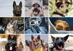 Military Working Dogs :')