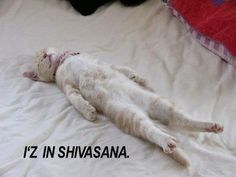 'Like' if Shavasana is your favorite asana :-)