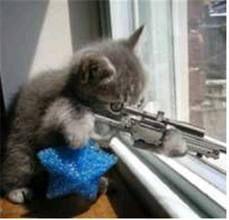 sniper kitty