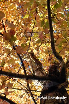 Look up at Fall by Kristyjphotography on Etsy, $25.00