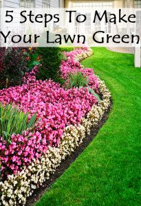 5 steps to make your lawn green.