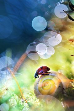 """""""The Tale Of The Ladybug & The Snail"""""""