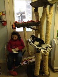 Students work on their reading skills by reading to cats at the West Suburban Humane Society's Cat Tales program. #catsrock #kidsreading