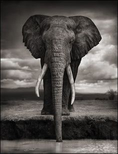 most definitely one of my favorite photographs by one of my favorite photographers. photo/nick brandt