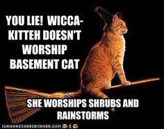 wicca kitty