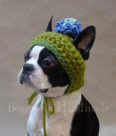 Crocheted dog hat!  Andrea, I know you have to make these lol!