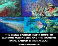 The Belize Barrier Reef is home to glorious marine life and the colorful coral garden is spectacular | Flickr - Photo Sharing!