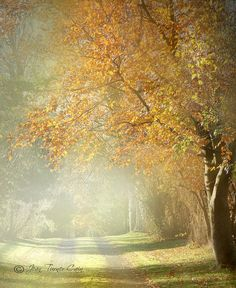 Autumn Mists | Flickr - Photo Sharing!