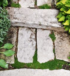 Placing Irish Moss, Thyme and sedum on a stone stairway.   http://in-s…