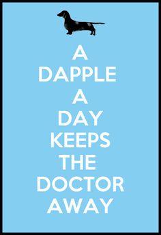 A Dapple a Day Keeps the Doctor Away - #dapple #dachshund.